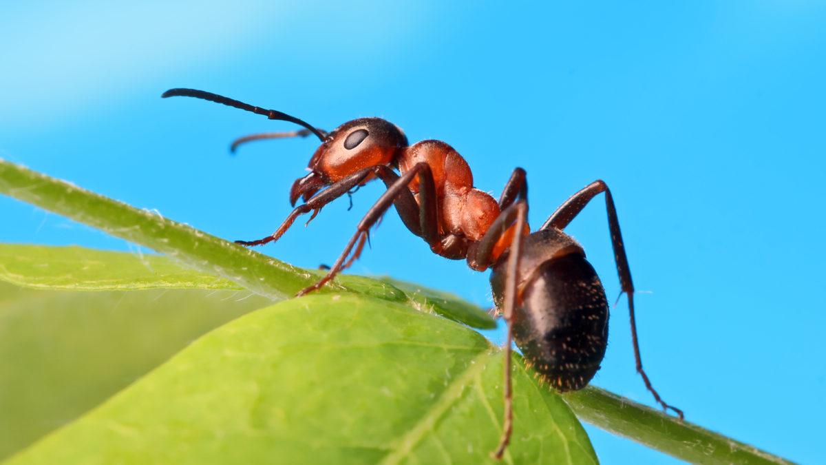 Ugryzienie mrówki – co zrobić? Najlepsze sposoby na walkę z objawami ukąszenia