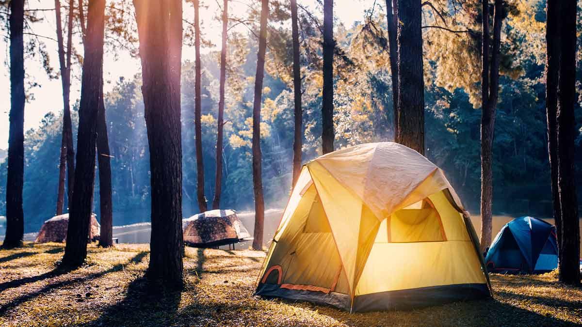 namiot w lesie